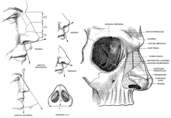 DOCTOR ÁNGEL URPEGUI GARCÍA - Cirugía de nariz, garganta y oído